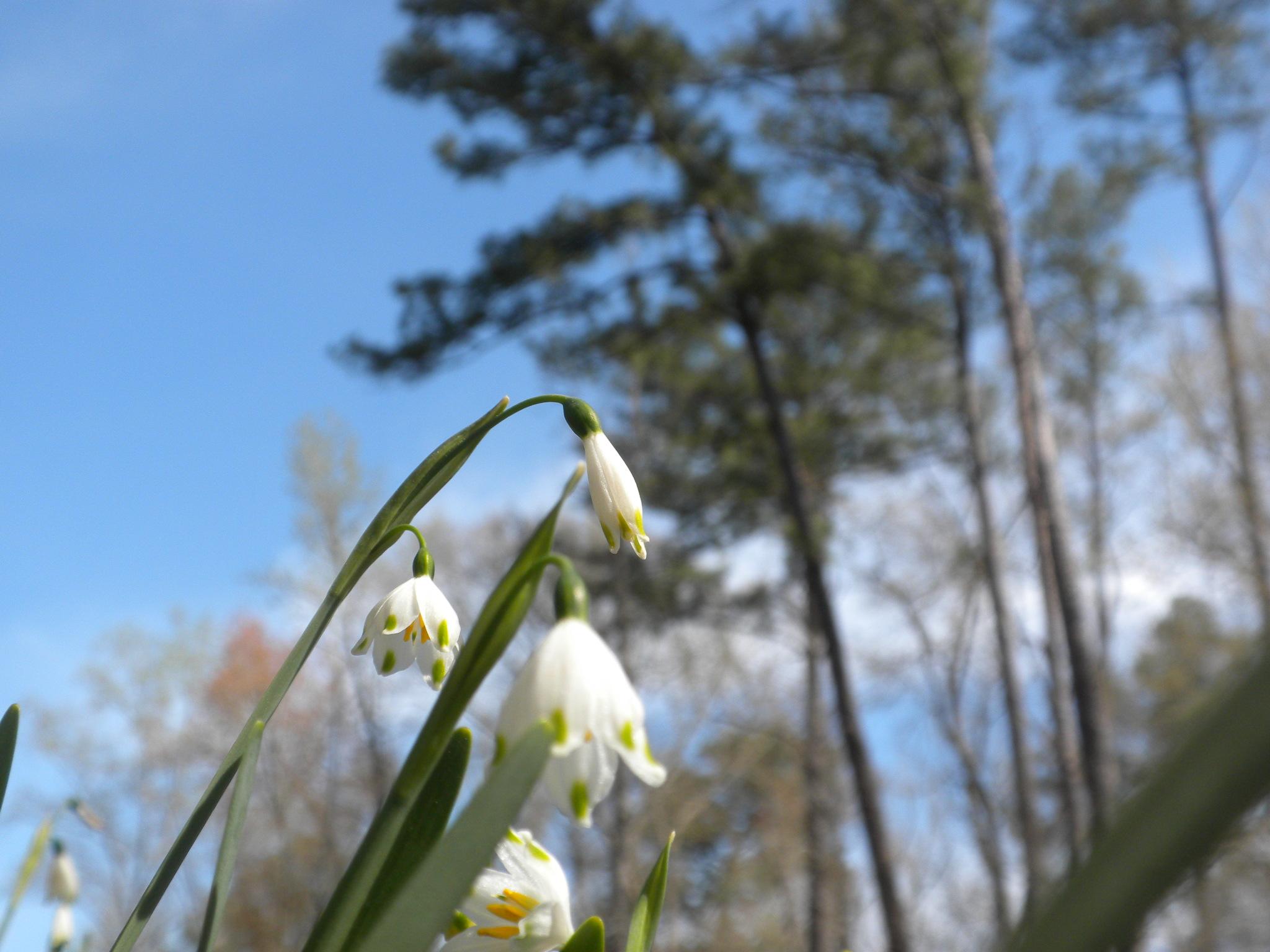 April In Alabama