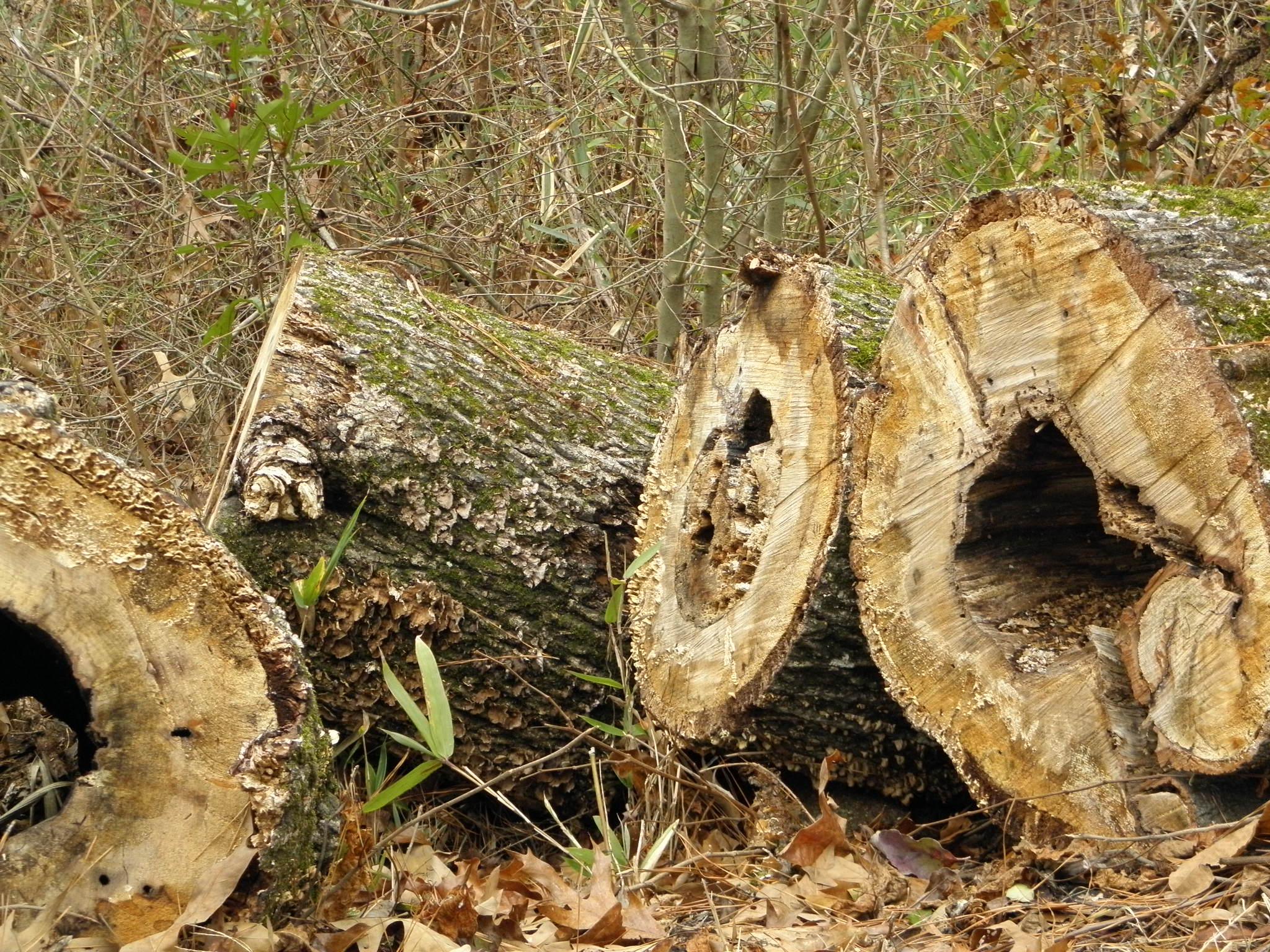 Fungii On A Log