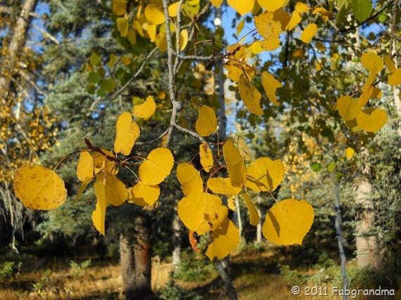 Fall At The North Rim