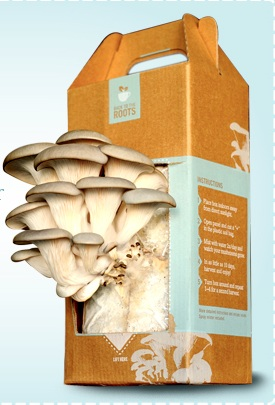 Grandma's Gift Guide: Back To The Roots Mushroom Kit
