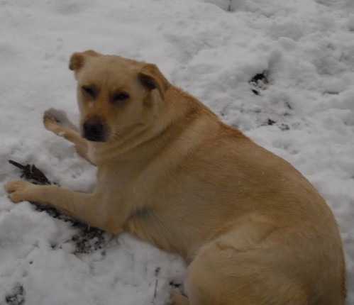 Sophie playing in the snow in 2010