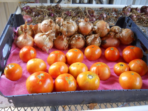 Tomatoes and red onions