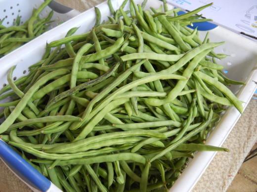 rattlesnake green beans