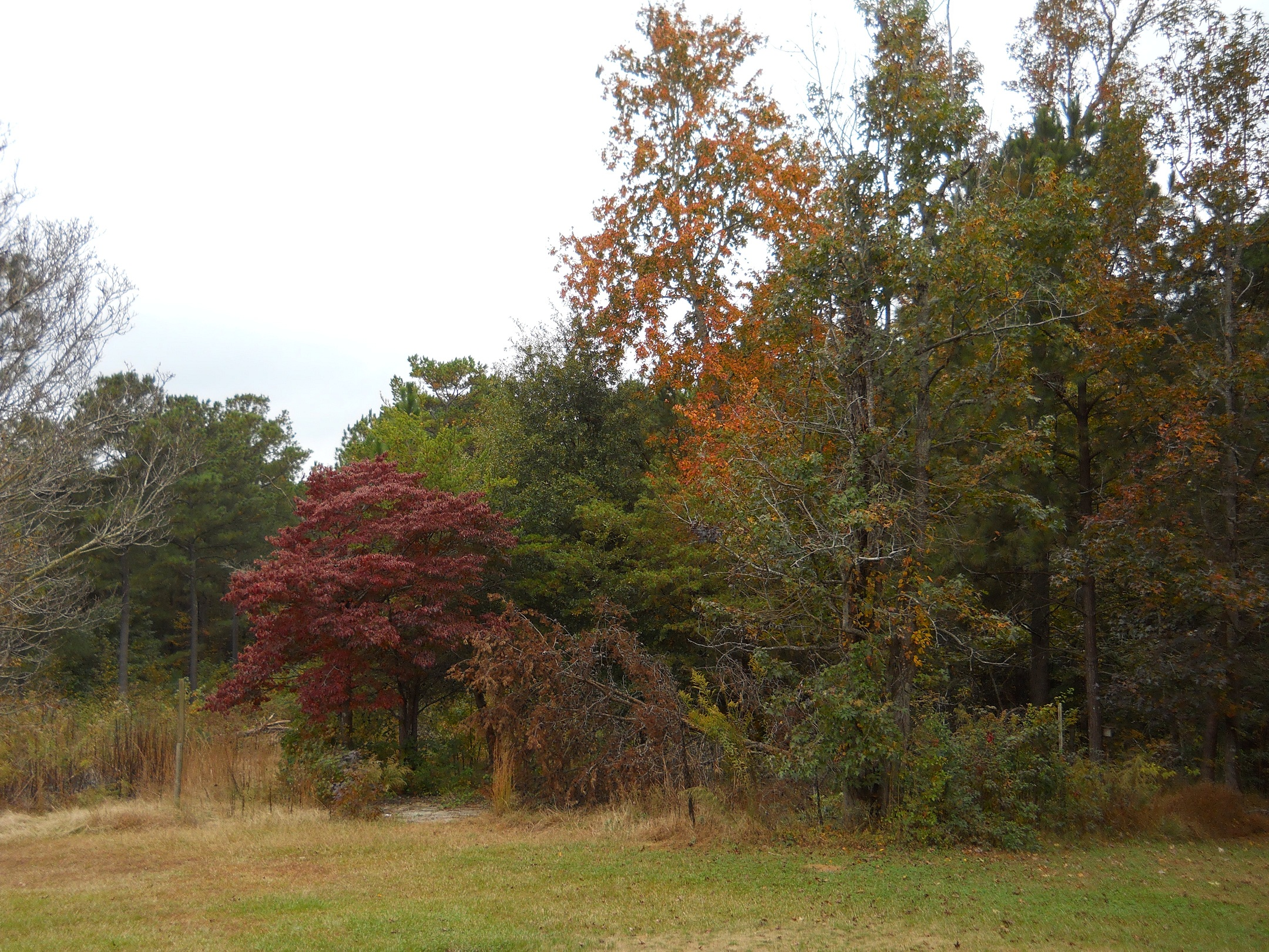 Fall Color In West Georgia