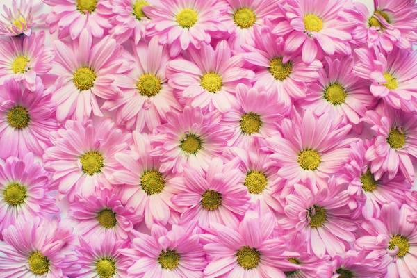 Beat seasonal allergies