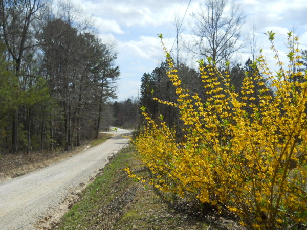 dirt road in the south