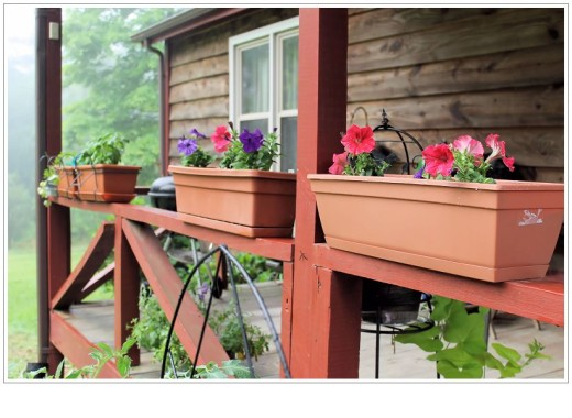 Petunias in planters on the porch rail.