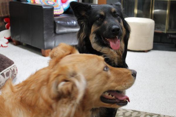 Becca's cute doggies, Lexie and Konza