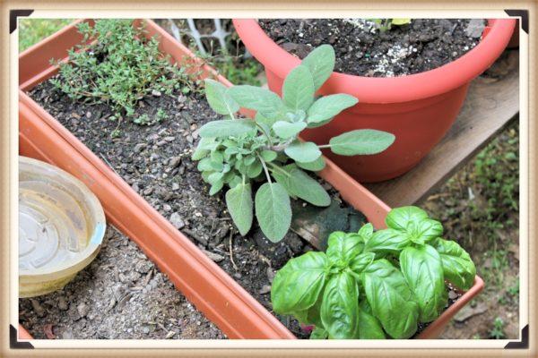 More herbs