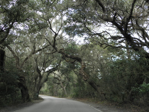 The main road inside Fort Clinch is a beautiful drive