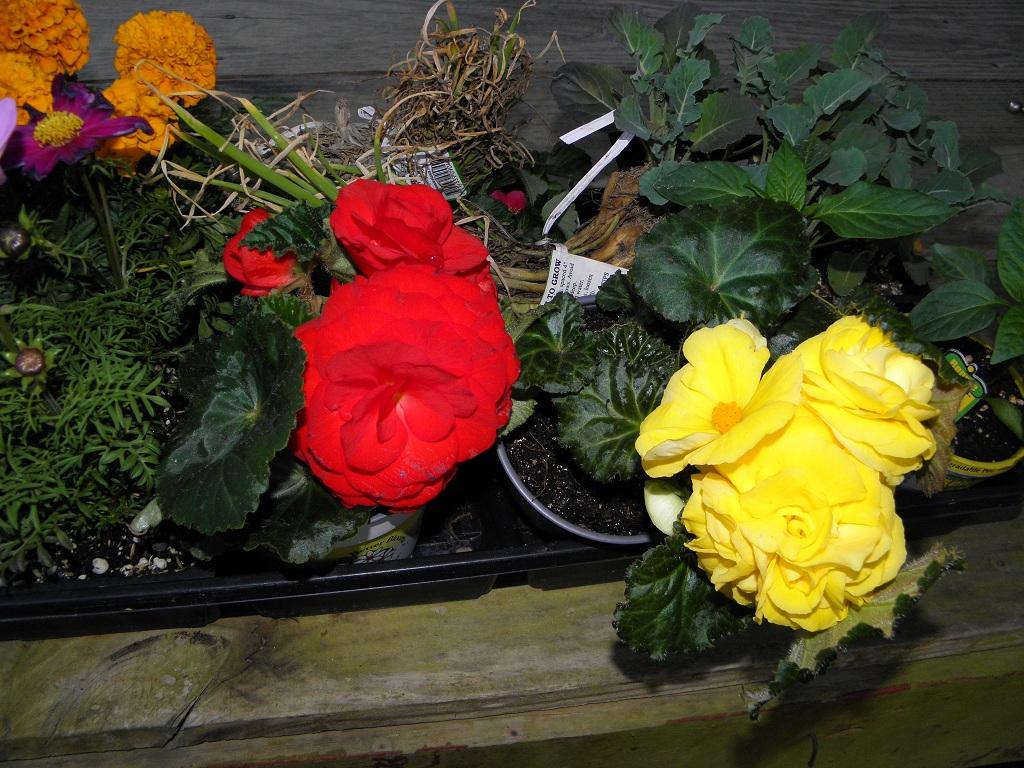 Grandma's Fabulous Garden