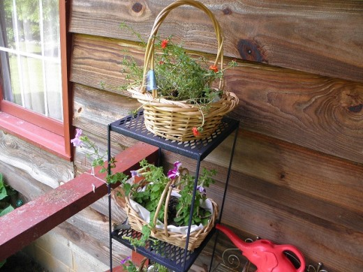Moss Rose, Petunias, and Sweet William