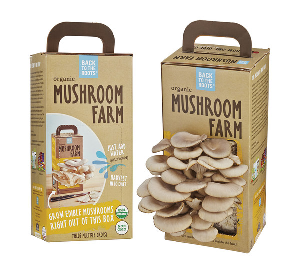 Back To The Roots Mushroom Farm Makes Growing Food Easy