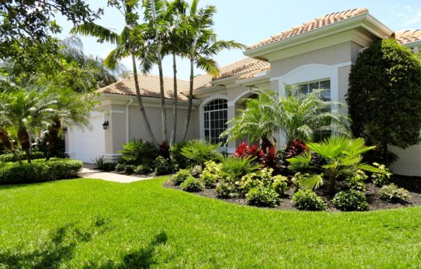 how to choose grass for your lawn