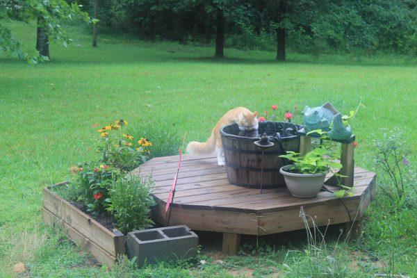 Cat-friendly Gardening Tips - Frandma on cat chocolate, cat food, cat winter, cat plants, cat orange, cat swimming pool, cat vegetable garden, cat flower garden, cat mint garden, cat grass garden, cat library,