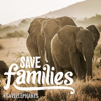 Help Save The Elephant Families!