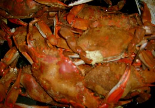 yummmm, Steamed Maryland Crabs!