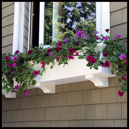 Window boxes can be a beautiful addition to your home.